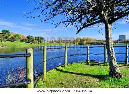 Tree Lake