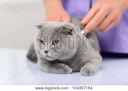 Positive vet examining a cat