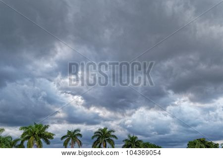 Storm Clouds Over Palm Trees