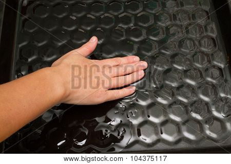 Woman Lubricates Oil Tray For Baking .