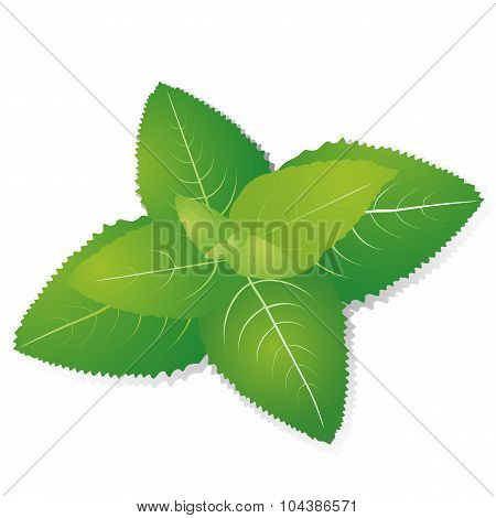 Green Leaves Of Fragrant Mint On Striped Background