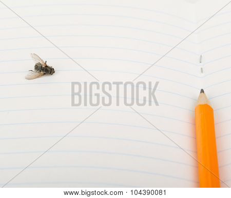 Copybook with fly