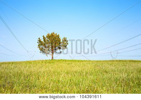 Tree On Meadow And High-voltage Line On Blue Sky Background