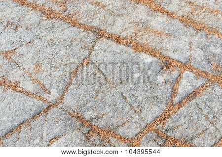 pine tree needles on a rock surface