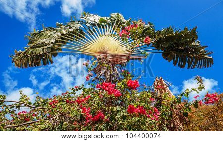 Palm tree surrounded by bright pink flowers with blue sky in the backdrop