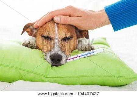 Sick Ill Dog