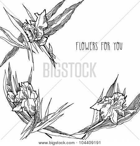 Background With Irises