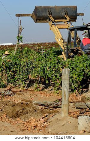Demolishing Old Vineyard