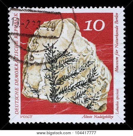 GDR-CIRCA 1973: A stamp printed in GDR shows Lebachia speciosa, Natural History Museum Pieces, circa 1973.