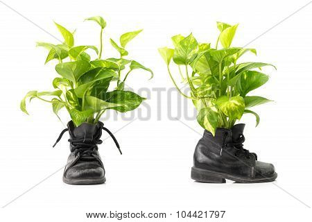 Houseplant In Combat Boots