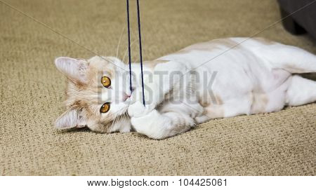 A Tabby Cream Cat Playing With Yarn