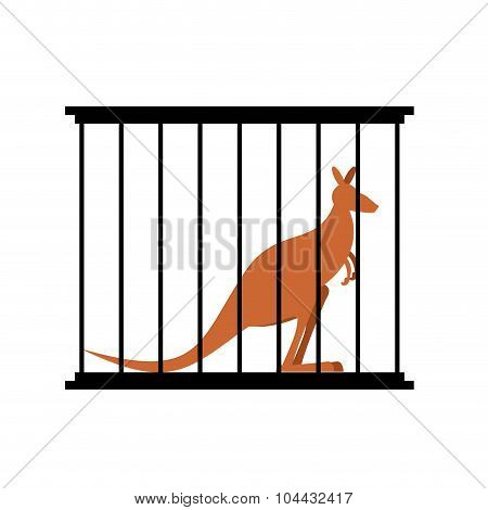 Kangaroo In Cage. Animal In Zoo Behind Bars. Australian Wild Animal In Captivity. Animal Captivity I