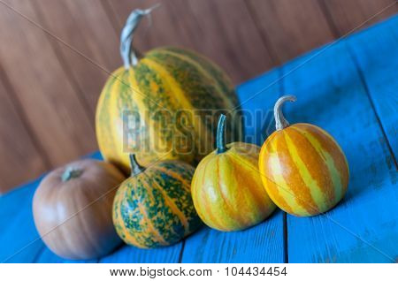 Set of five different pumpkins. Pumpkin - one Of autumn symbol. Unique view