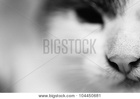 Black and white photo of a cat's head close-up.