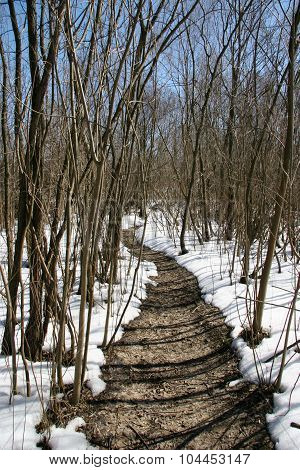 Thawed Path In The Midst Of A Snow-covered Forest On A Bright Sunny Day. Winter Landscape
