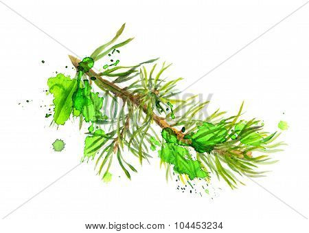 Fir tree branch in artistic style. Watercolor