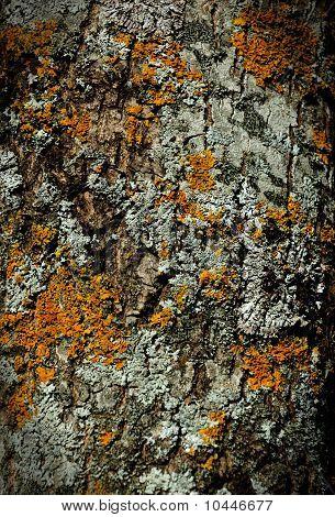 Moss Bark Wooden Texture