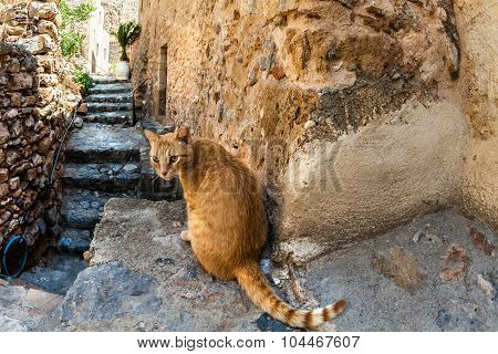 Red cat in Monemvasia