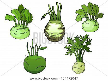 Fresh isolated kohlrabi cabbage vegetables