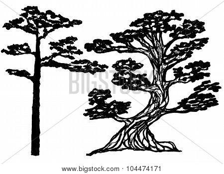 ink conifer trees