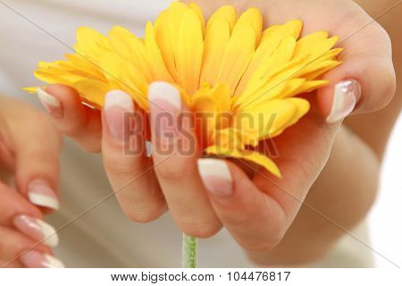 A woman is touching petals of a yellow gerbera, close-up view