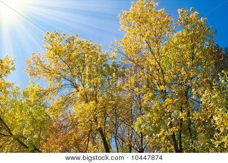Autumn Teetops