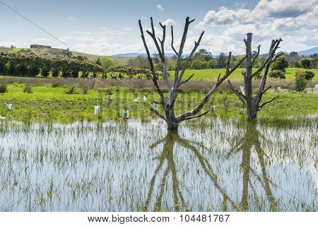 Two Dead Trees In A Pond