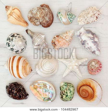 Sea shell selection on a distressed wooden background.