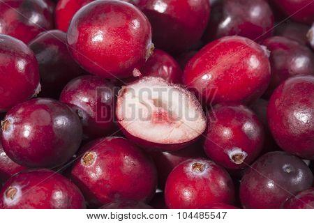Background Of Red Fresh Rawcranberry Fruits  Macro