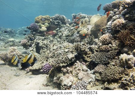 Colorful Coral Reef With Hard Corals In Tropical Sea , Underwater