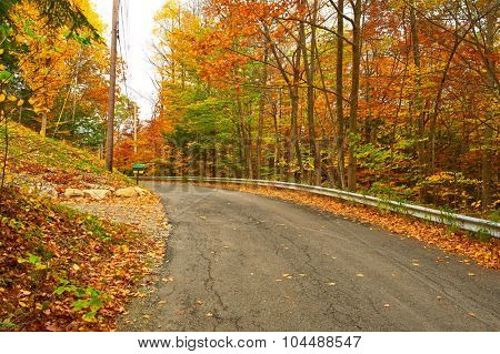 Autumn scene with road and mailbox