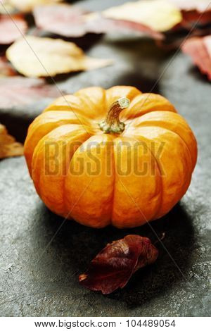 Studio shot of a nice ornamental pumpkins with fall leaves  on dark rustic background