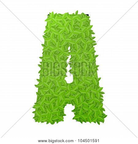 Uppecase letter A consisting of green leaves