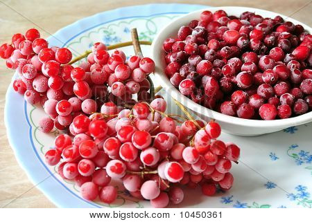 Red berries of a cranberry and guelder-rose