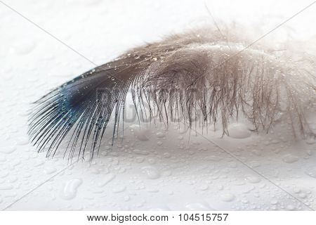 Color Bird Feather Lies On A White Surface