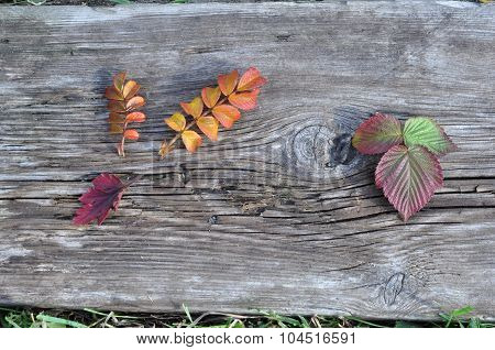 Autumn Leaves and Old Board