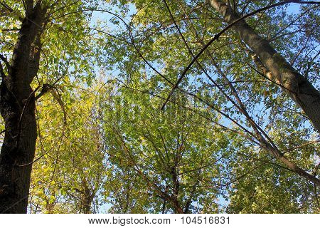Bellow trees in autumn forest