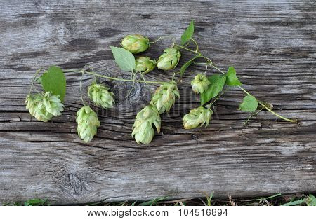 Green Hops and Old Board