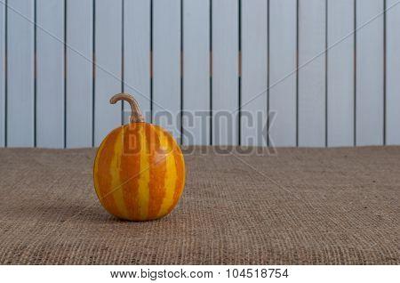 Orange striped pumpkin on white wooden backgraund, copy space for text