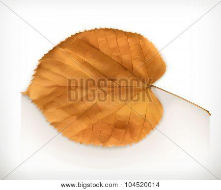 Dry leaf, autumn vector icon