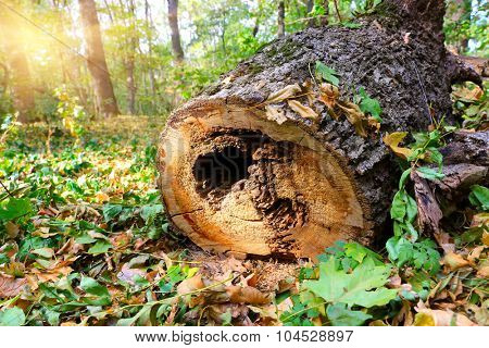 old wooden log in forest at nice sunny day