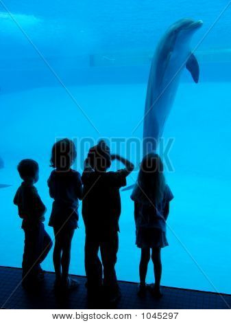 Children And Dolphin