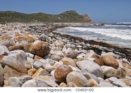 Beach With Boulders And Kelp. The Cape Of Good Hope.