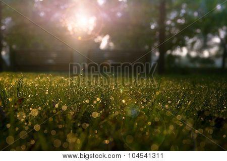 dewy park