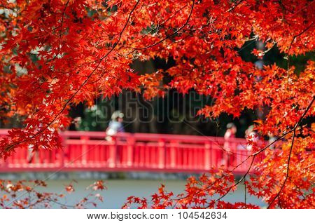 Colorful Autumn Leaf With Red Bride In Background