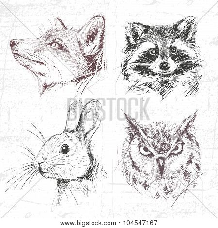 Set Forest Animals: Fox, Raccoon, Rabbit And Owl (eagle Owl), Drawn By Hand. See Also Other Sets Of