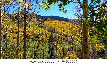 Yellow Aspens in Santa Fe New Mexico