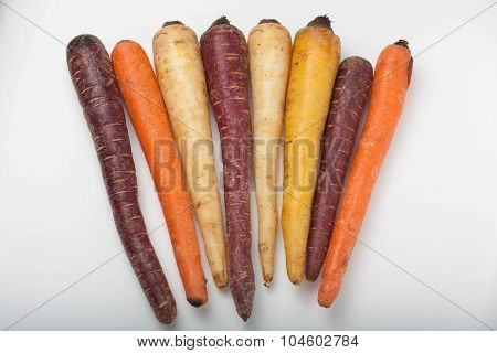 different colored fresh picked assorted carrots and parsnips isolated on white background