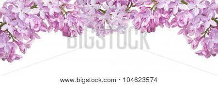 light lilac flower stripe isolated on white background