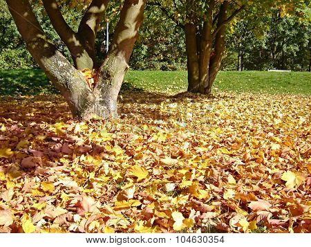Dry Leaves Under The Trees